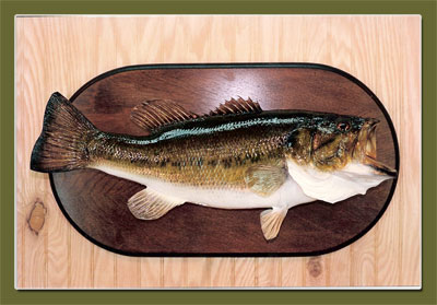 Trophy Fish Mounts By Lee 39 S Taxidermy The Plains Virginia